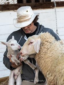 Lambs 13 April 2018-7052