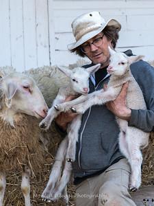 Lambs 13 April 2018-7020