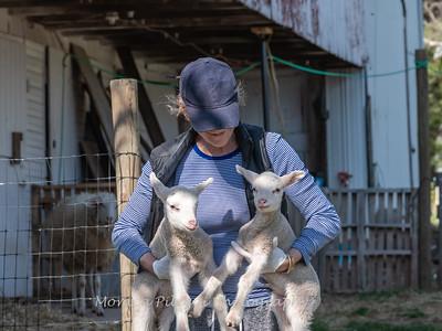 Lambs 13 April 2018-6925