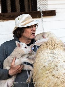 Lambs 13 April 2018-7051