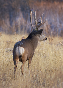 If Those Antlers Could Talk