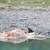 Grizzly & Whale Carcass