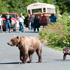 Mama Grizzly & Cub II