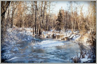 Anchorage - Far North Bicentennial Park in winter2