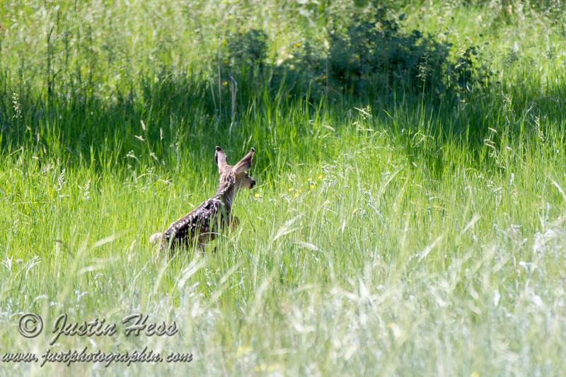 Bounding Through Grass