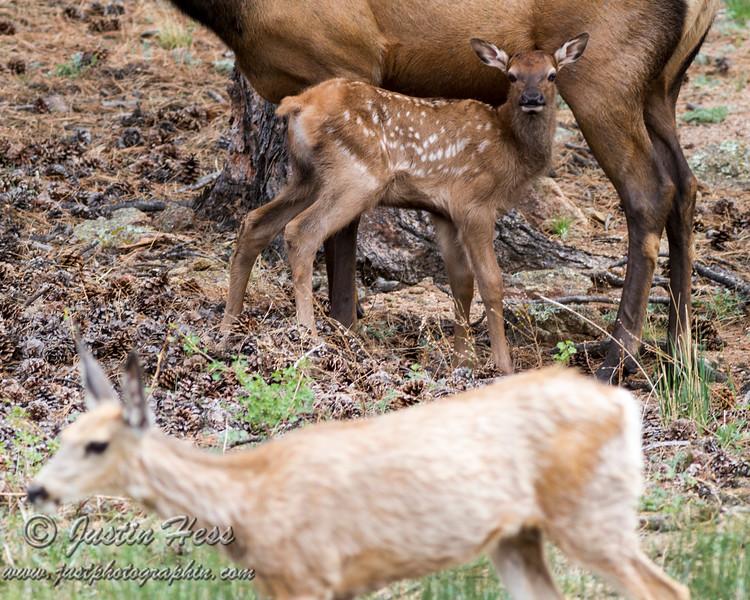 Doe a Deer?