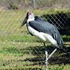 Florida Feb 2013 Photos 042-001