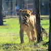 Florida Feb 2013 Photos 067-001
