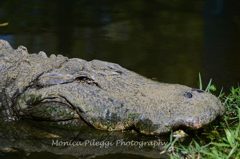 Florida Feb 2013 Photos 308-001