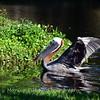 Florida Feb 2013 Photos 033-001