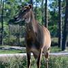 Florida Feb 2013 Photos 137-001