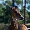 Florida Feb 2013 Photos 138-001