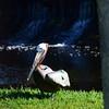 Florida Feb 2013 Photos 031-001