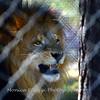 Florida Feb 2013 Photos 065-001