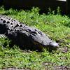 Florida Feb 2013 Photos 306-001