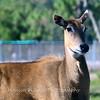 Florida Feb 2013 Photos 136-001