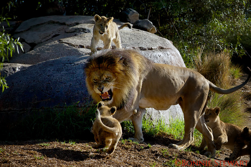 "Cub - ""Dad here I come!""<br /> Dad - ""Whoa settle down son!"""