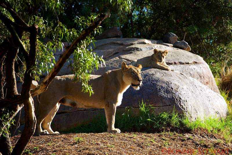"""Lioness - """"Oh my........"""""""