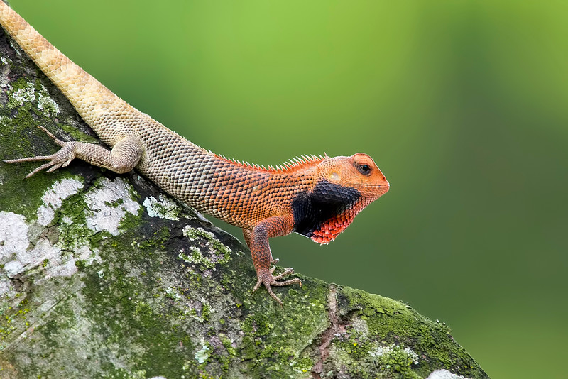 Lizards, etc