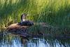 Last Sunlight on the Nest <br /> <br />  Grand Portage Indian Reservation <br /> Grand Portge, Minnesota <br /> (5II2-00773)