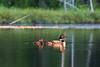 "Morning Light <br /> <br /> ""Loon Lake"" <br /> Grand Portage Indian Reservation <br /> Grand Portage, Minnesota <br /> (5II2-02369)"
