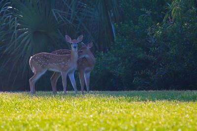 Deer 15