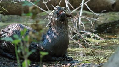 Otter 01