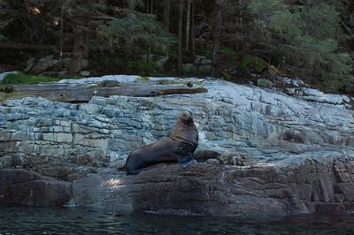 SEA LION SHOW OFF