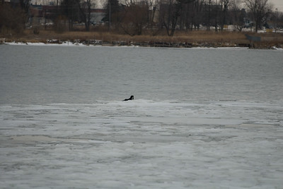 CHRISTMAS DAY'S RIVER OTTER IN ELEVATOR BAY IN THE CITY OF KINGSTON