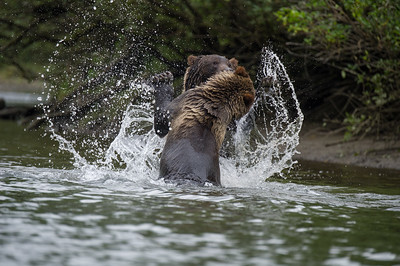 WATERFIGHT - GRIZZLY STYLE