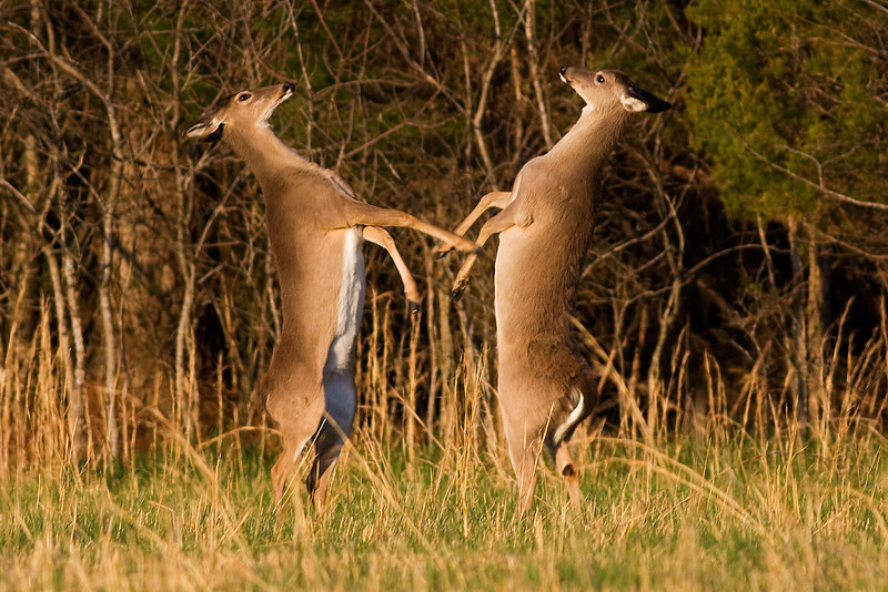 Dancing With the Stars Shiloh Deer style 2010.