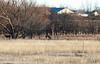 2011-12-24 Ft  Reno Okla-66