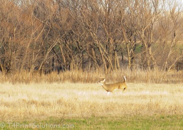 2011-12-24 Ft  Reno Okla-19
