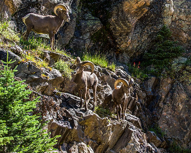 Mammals of the Rockies