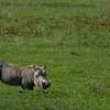 - Ngorongoro Crater