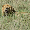 -Serengeti and Ndutu