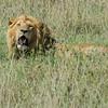 -Serengeti and Ndutu