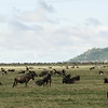 Great Migration in Serengeti