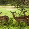 Africa Safari, Day 2