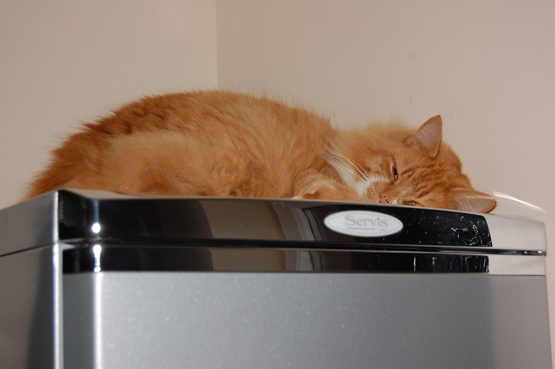 Fridges are real cool places to sleep.