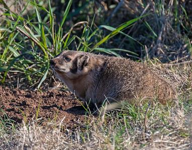 Badger, SW Oklahoma