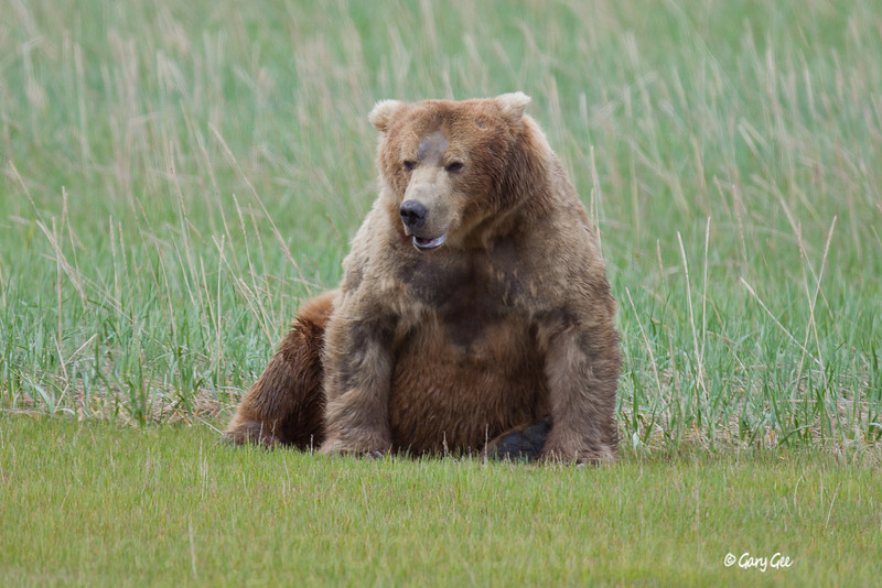 Well, looks like it's time for another break for this big Grizzly bear!