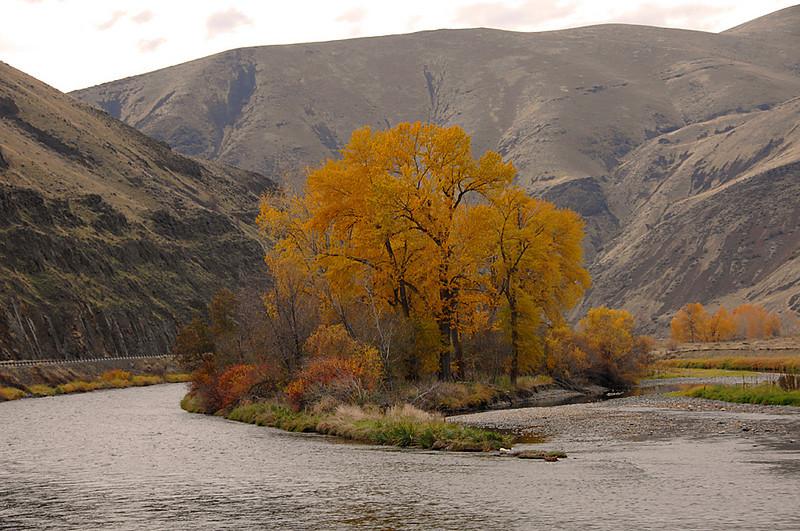 7687 Autum color Yakima Canyon