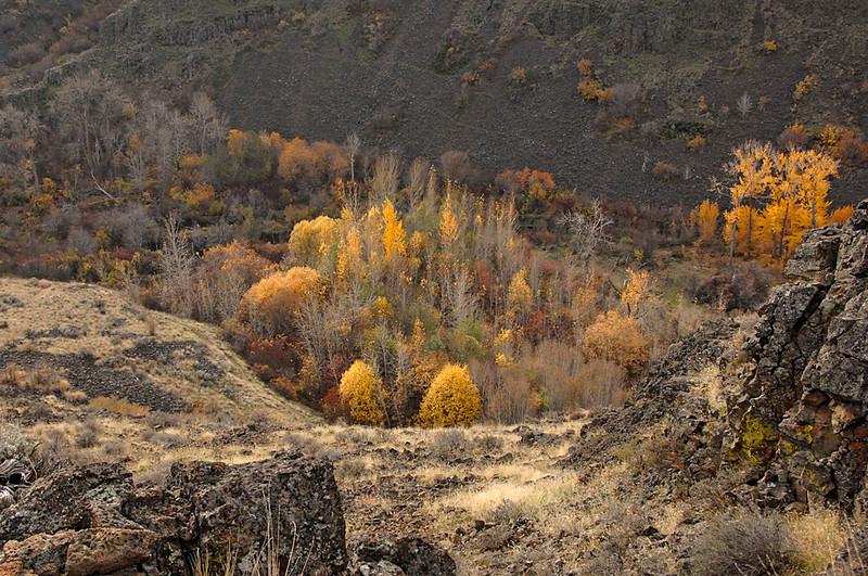 7352 Autum color Umtanum Canyon