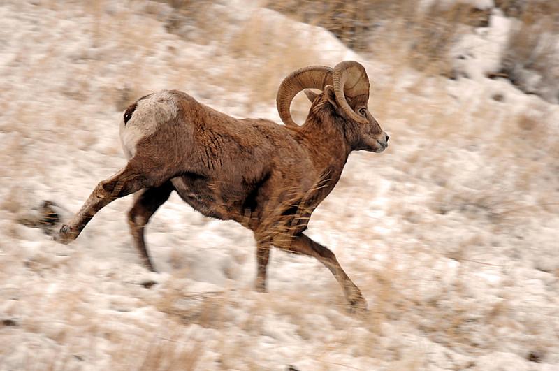 8469 running ram
