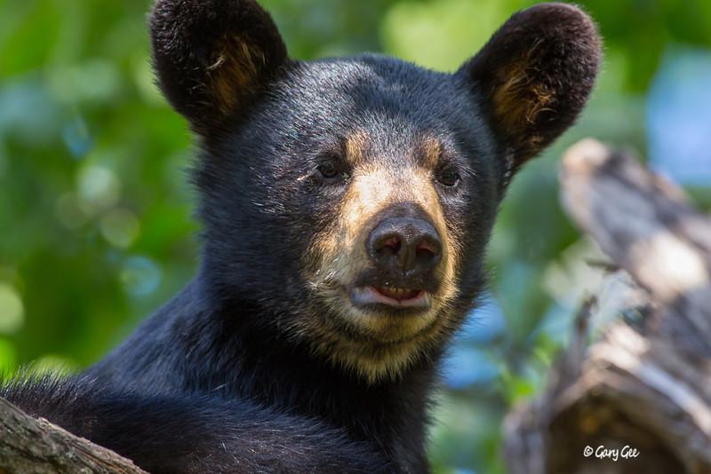 Black Bear_23-1