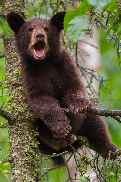 Black Bear_86-1