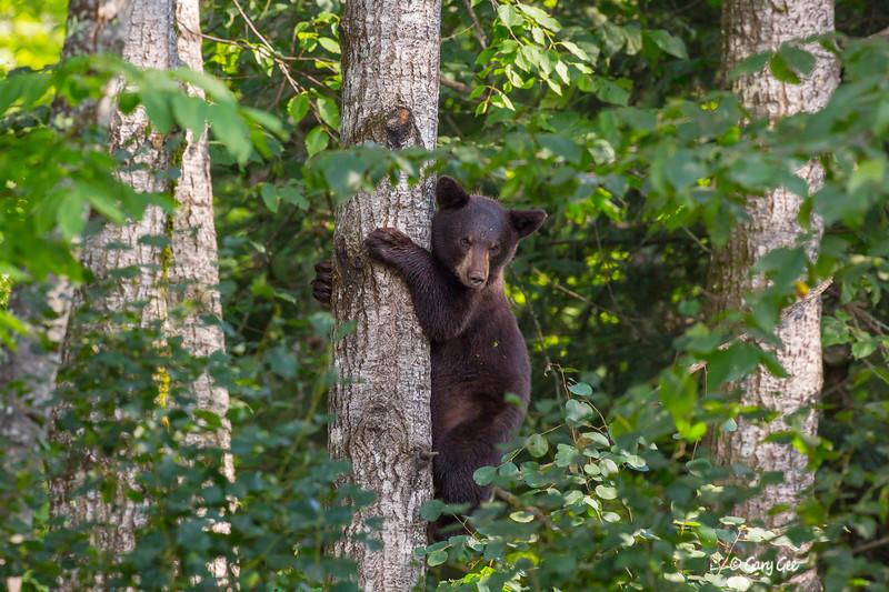 Black Bear_135-1