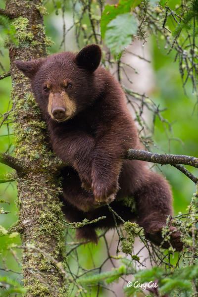 Black Bear_84-1