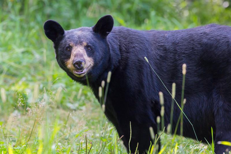 Black Bear_21-1